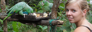 Two green parrots eating from a bird table with a girl next to them.